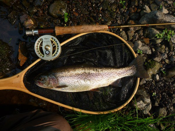 Fly fishing in north alabama huntsville outdoors for Trout fishing in alabama